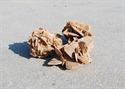 Picture of Ρόδον της Ερήμου